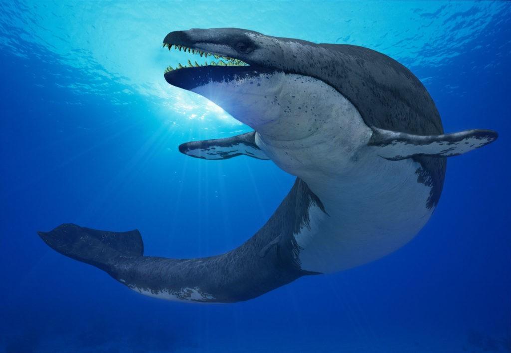 хищная рыба базилозавр