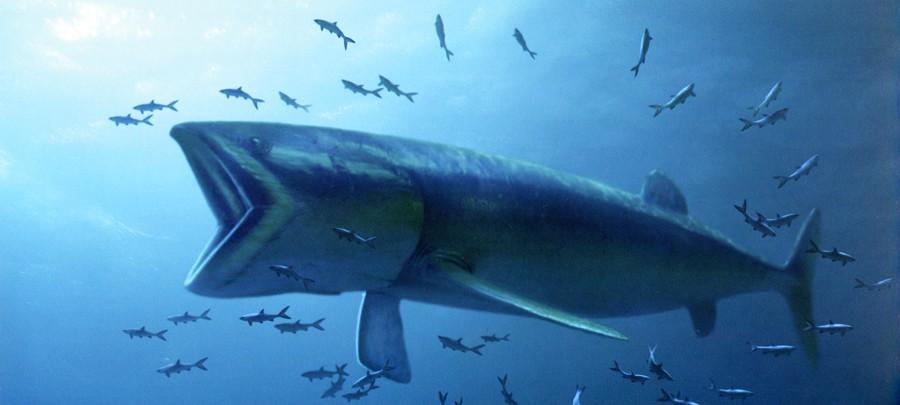 огромная рыба лидсихтис