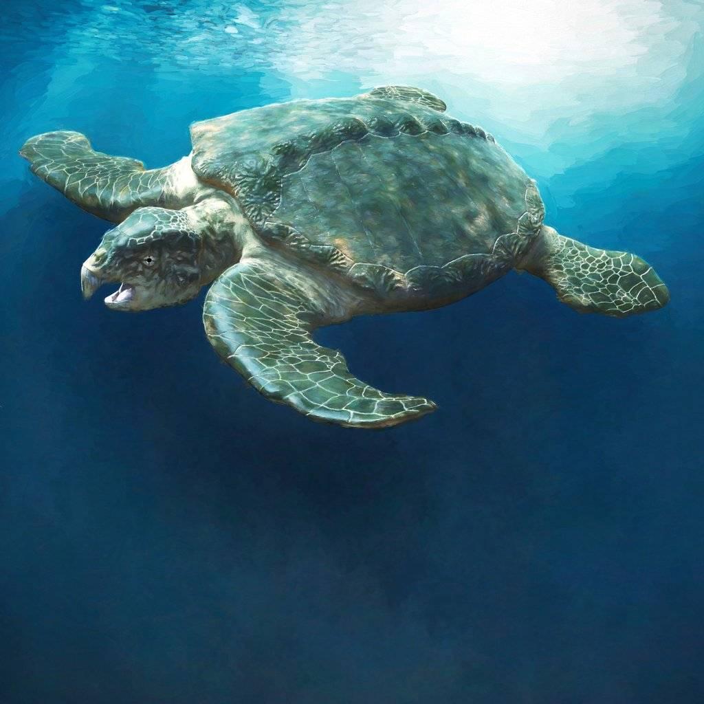 древняя морская черепаха