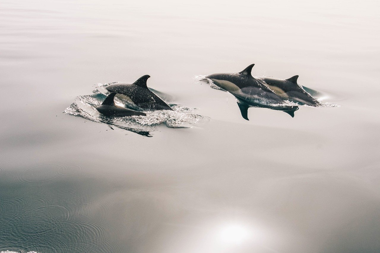 может ли дельфин убить человека
