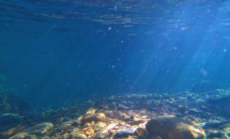 внешний вид дна океана