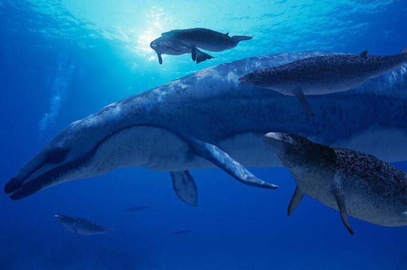 как выглядел огромный кит