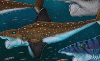 внешний вид акулы убийцы
