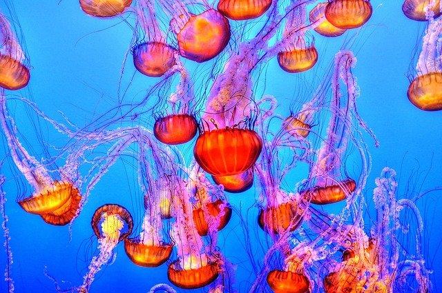 медузы в воде