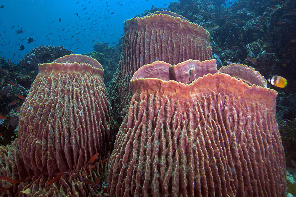 внешний вид и строение морской губки