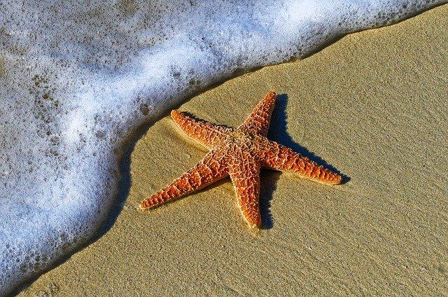 строение морской звезды