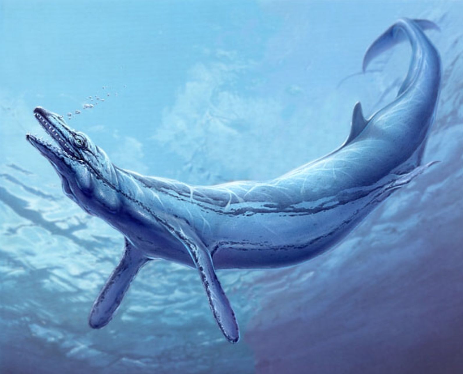 особенности строения крупнейшего кита