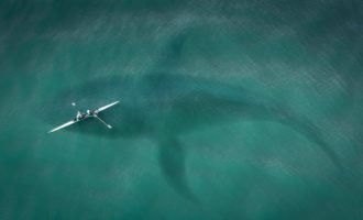 размеры кита в сравнении с лодкой