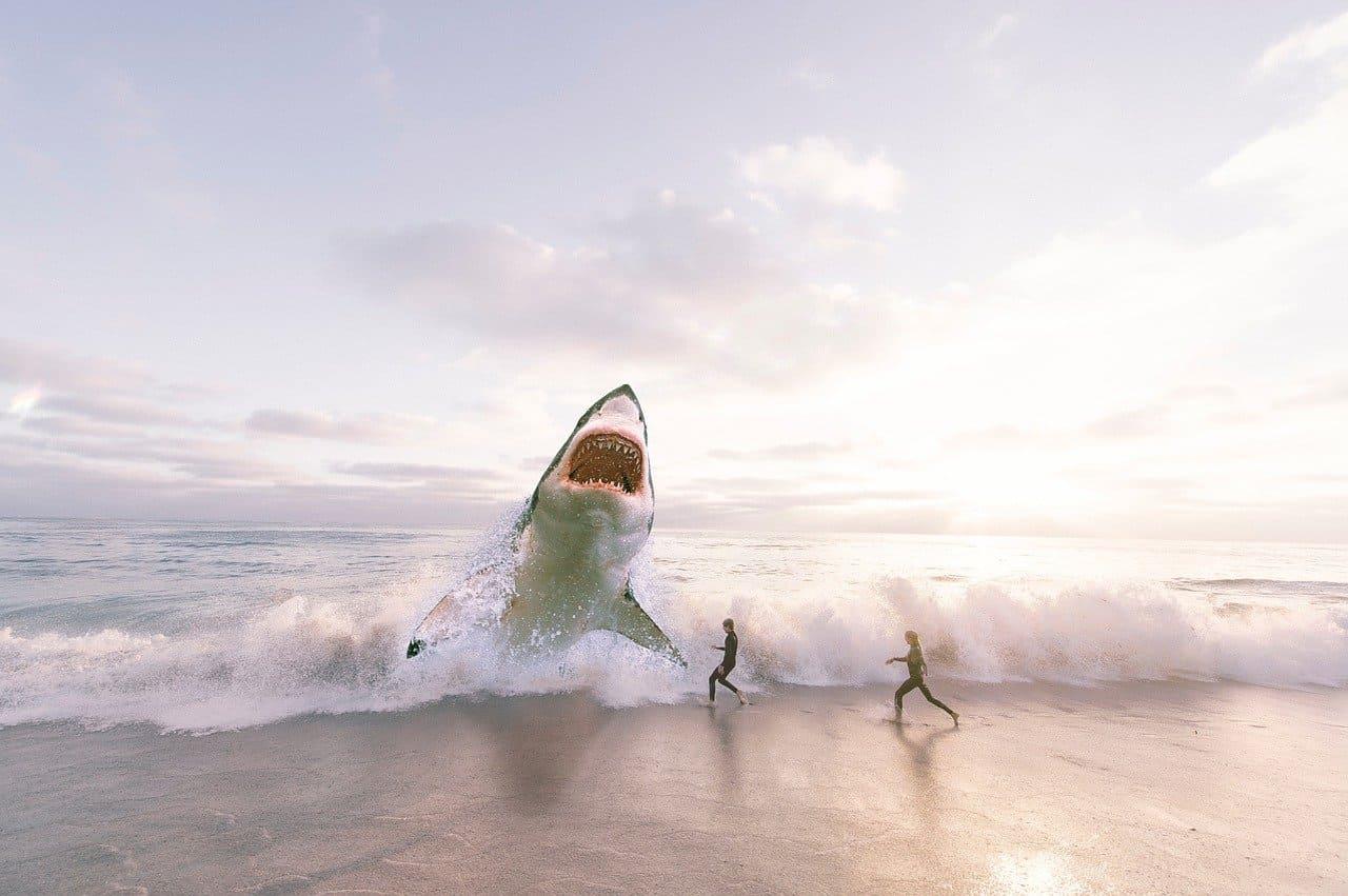 большая белая акула на берегу океана
