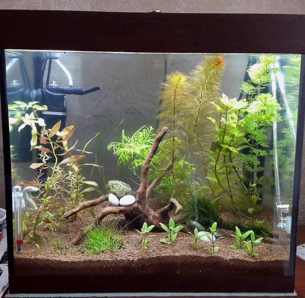 аквариум в природном стиле