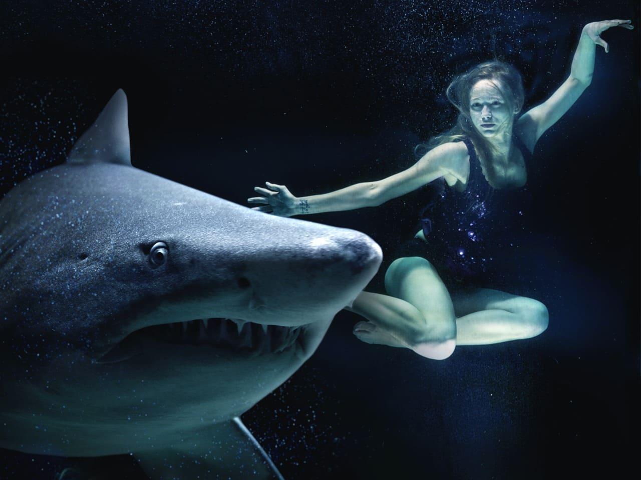 как выглядит большая белая акула