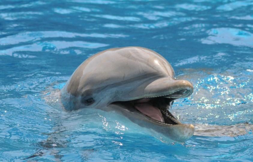 как выглядит дельфин