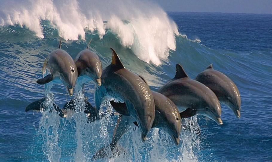 насколько опасен дельфин