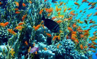 глубины красного моря