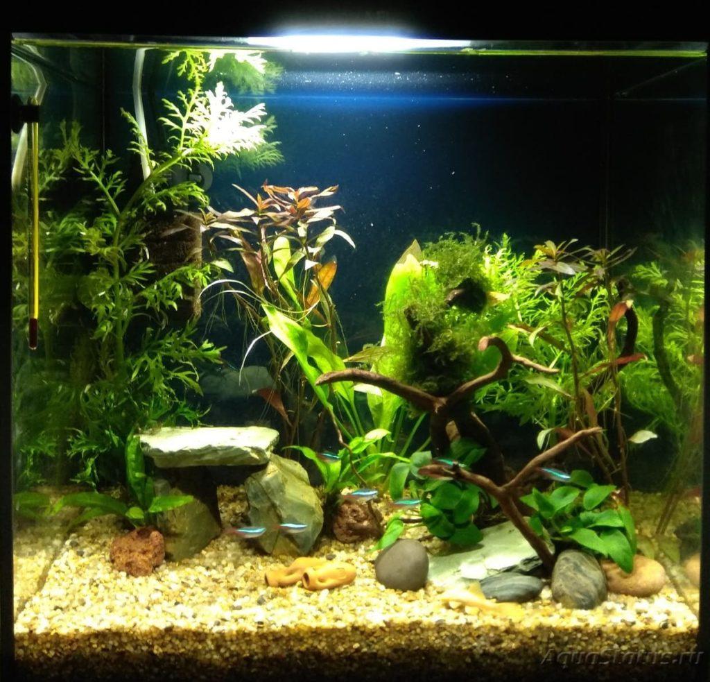 домашний аквариум с рыбами и растениями