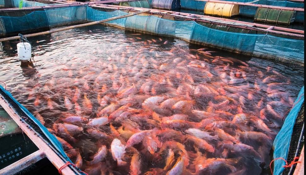 рыба в тесном водоеме
