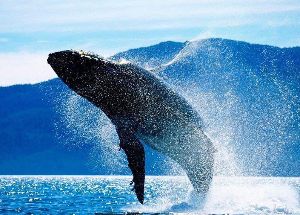 огромній синий кит