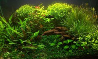 аквариум -травник