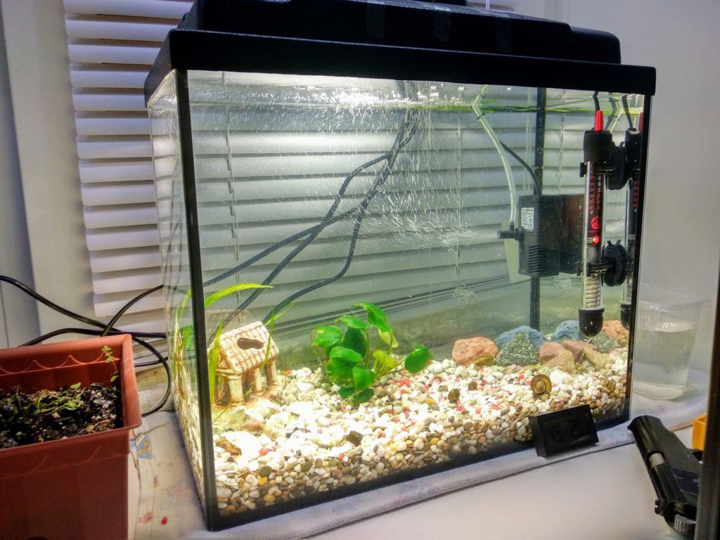 запуск маленького аквариума