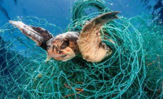 как страдают животніе от сетей и мусора