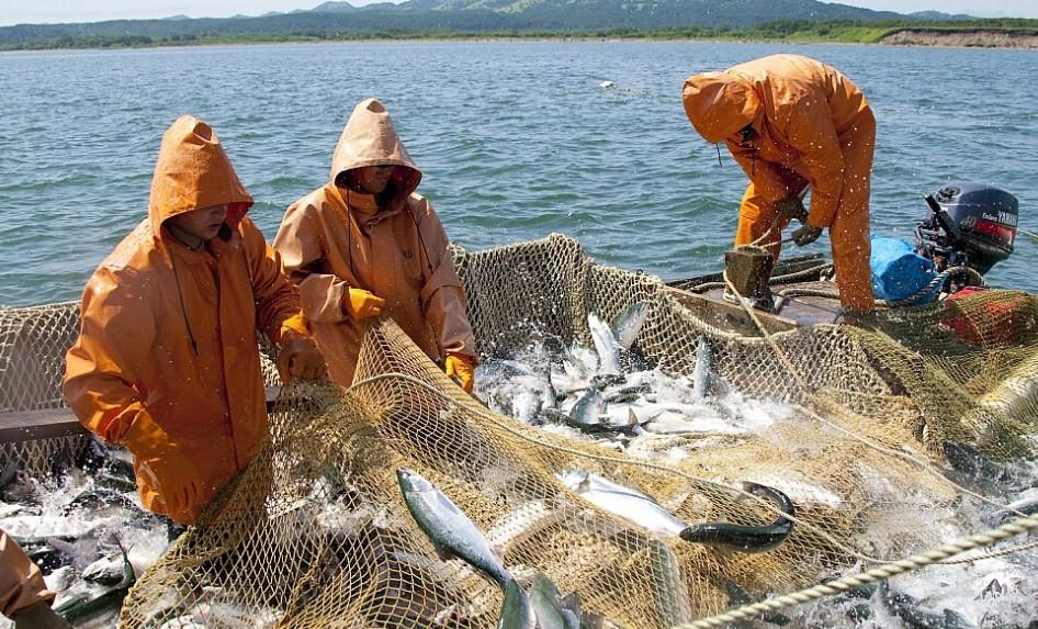 рыба в сетях