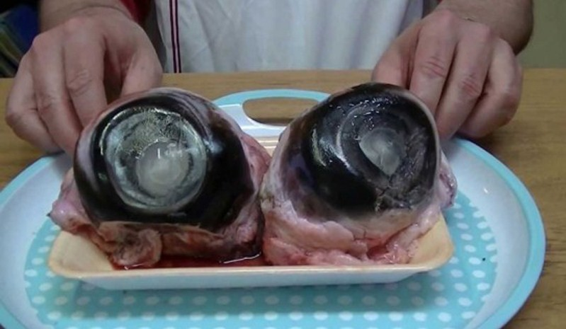 огромные глаза тунца