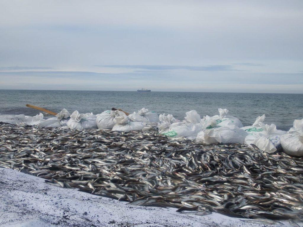 объемный улов рыбы