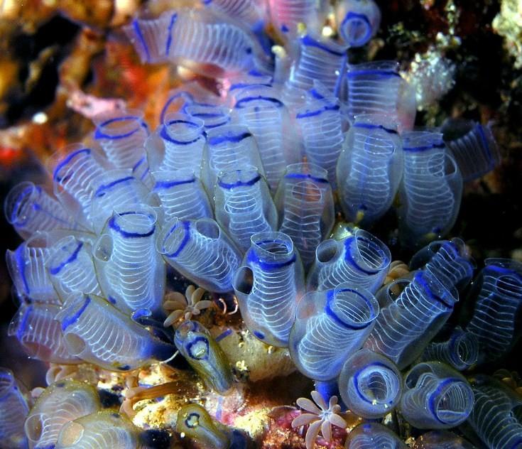 венерина мухоловка под водой