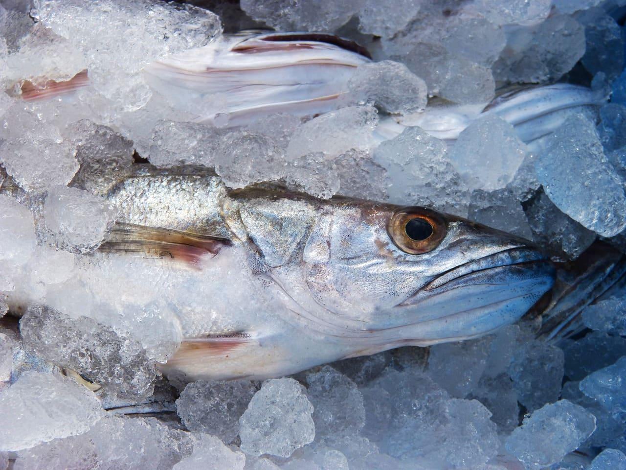 рыба с кубиками льда