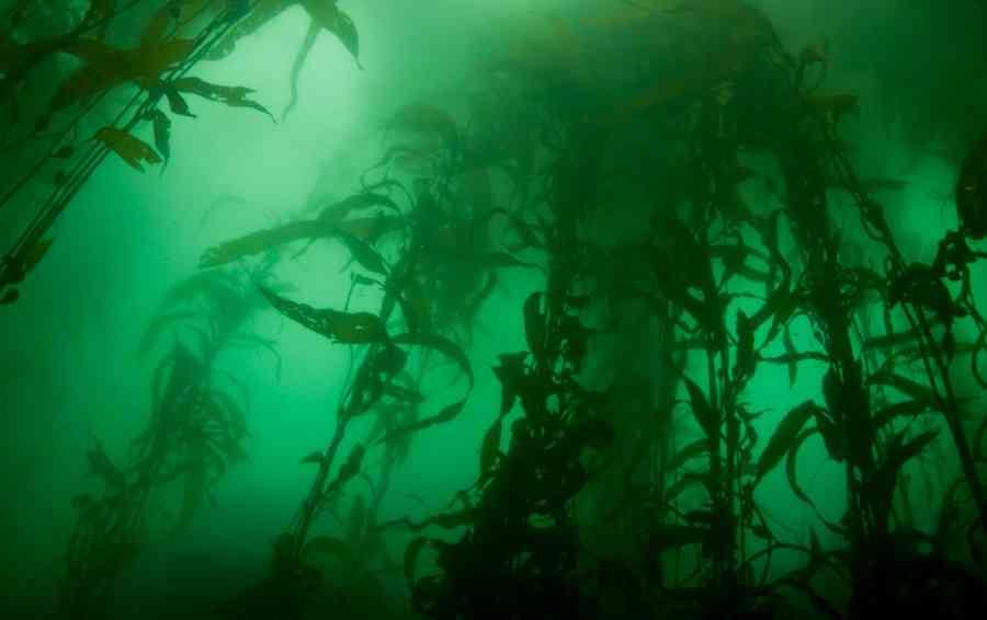 морские водоросли на глубине