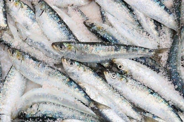 замороженная рыба сардина