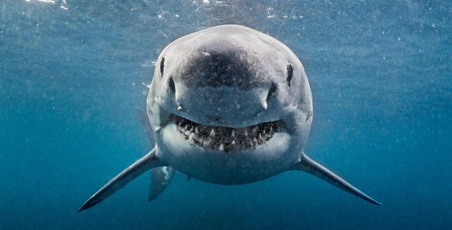 какие акулы добрые