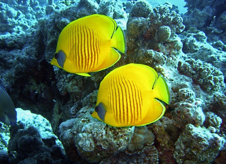 богатая фауна Красного моря