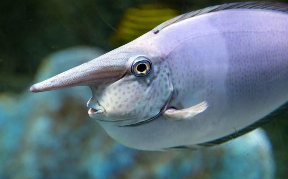 угадайте название рыбы