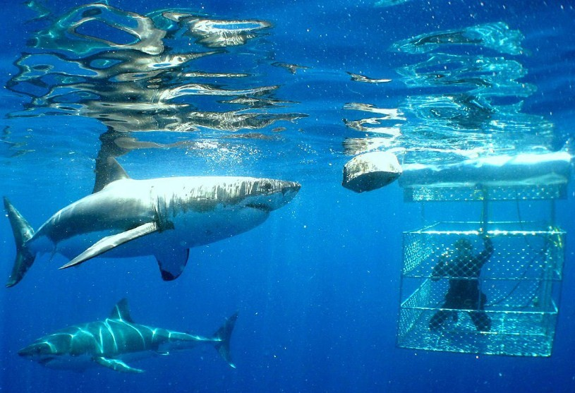 необычный отдых с акулами