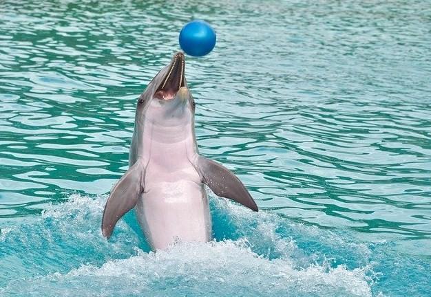 дельфин с мячиком