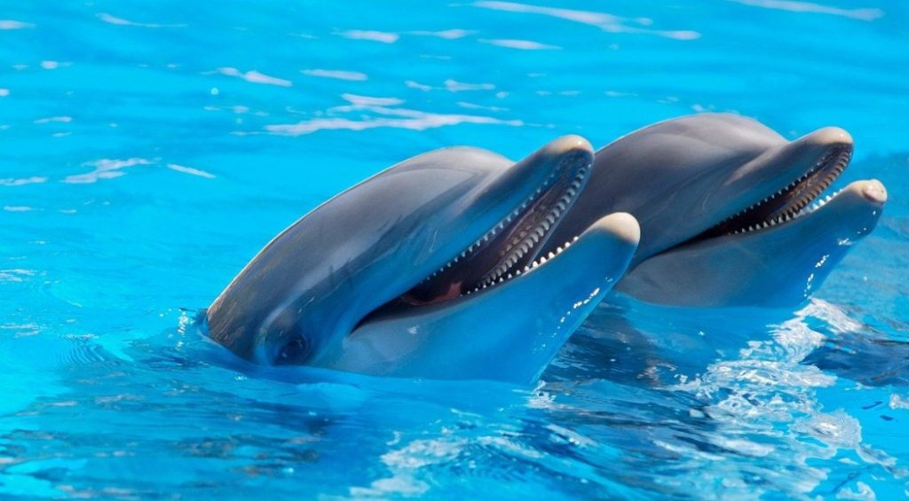 улыбка дельфина