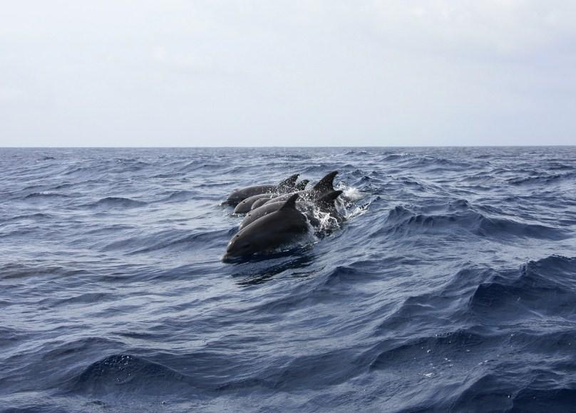 дельфин на волнах