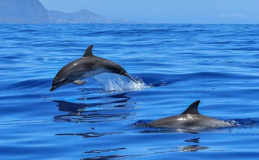 дельфины очень быстро плавают