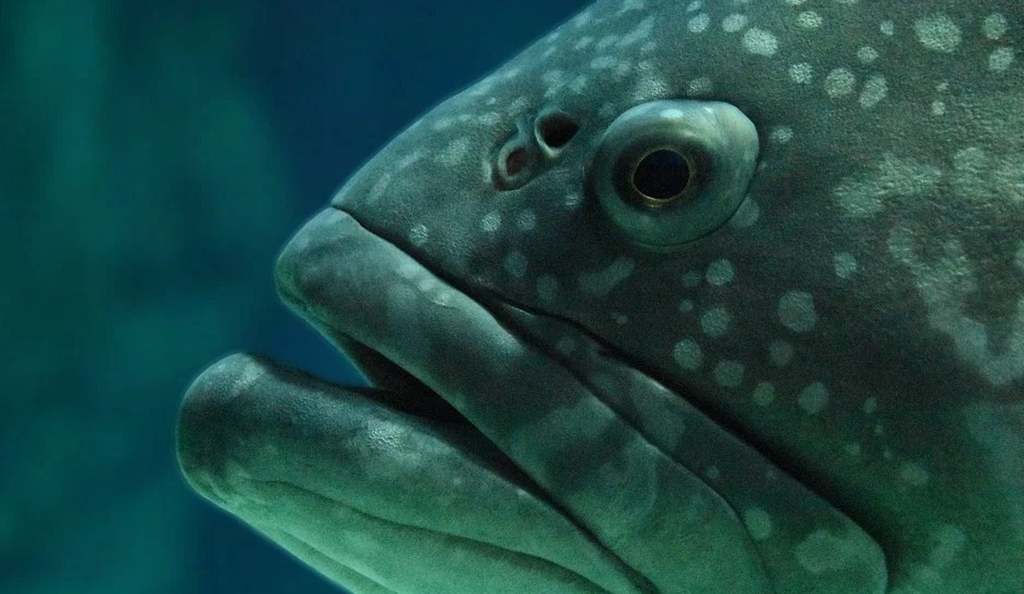 для чего ноздри рыбам