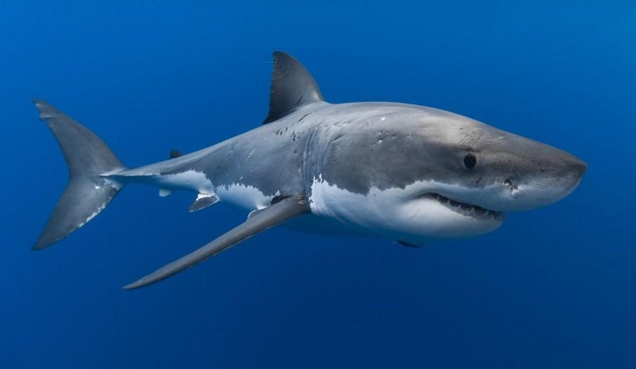 Акулья личность: не всегда они агрессивны и беспощадны