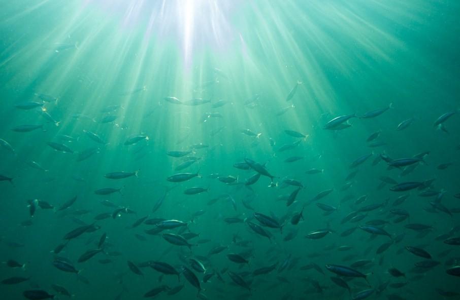 рыба плавает в воде
