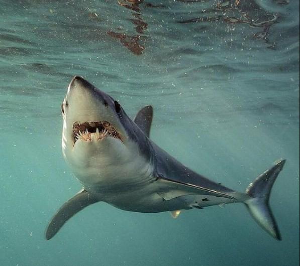 как различается характер акул