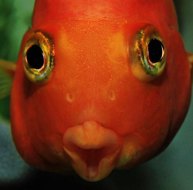 зачем рыбье ноздри