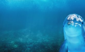 дельфин в естественной среде
