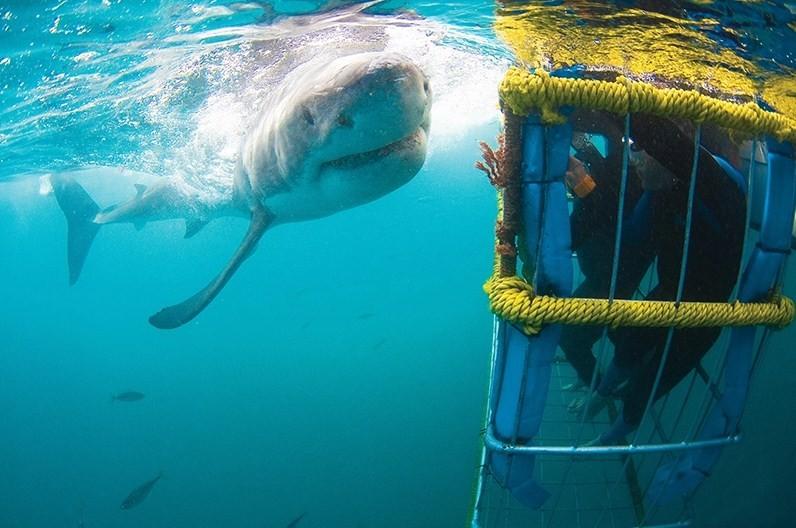 акула возле клетки