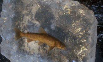 если рыб зеамерзнет во льду