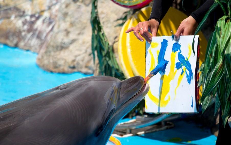 дельфин рисует кистью