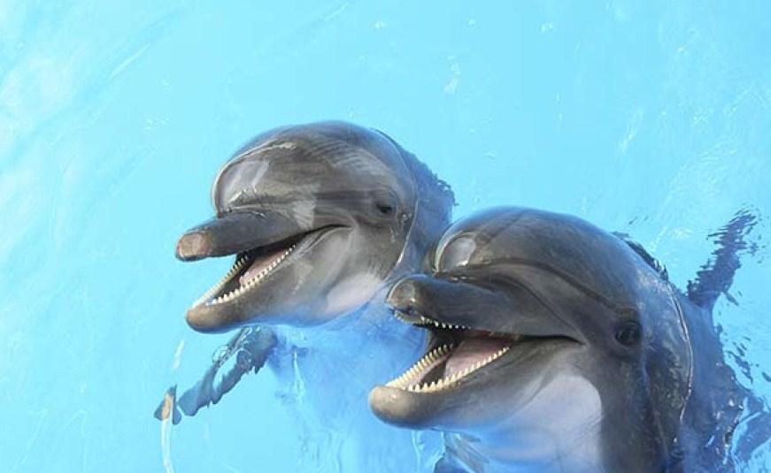особенности внешнего вида дельфинов