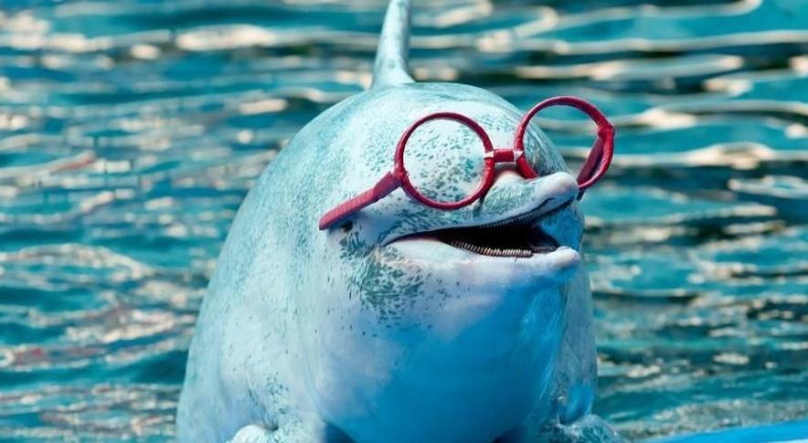 дельфин в очках